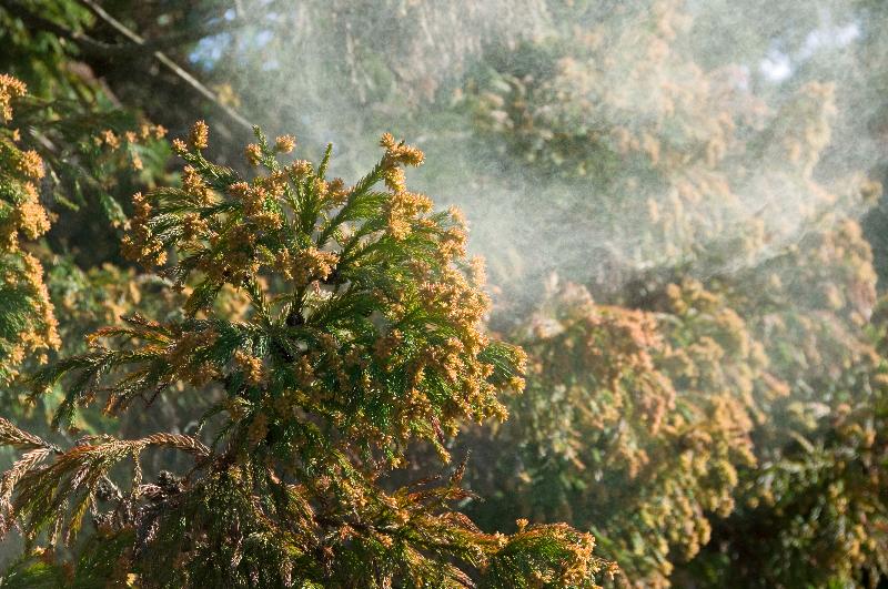 漢方によるアレルギー治療について